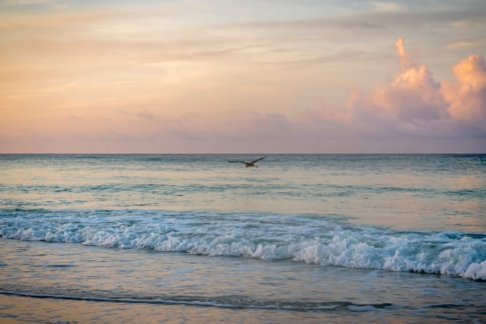 A fine-art photo of a lone seagull flying over the beach break at sunrise in Destin, Florida