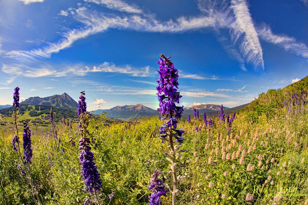 Purple Wildflowers Snodgrass Trail Photography by Koral Martin