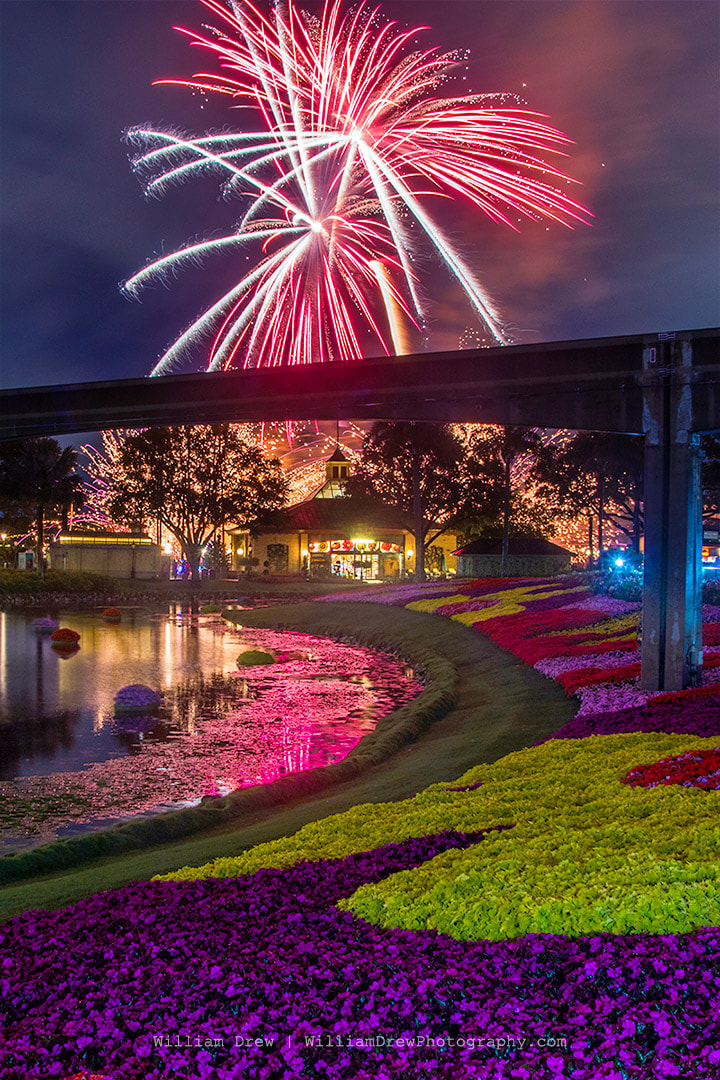 Epcot Flower and Garden Illuminations 1 - Epcot Images | William Drew Photography