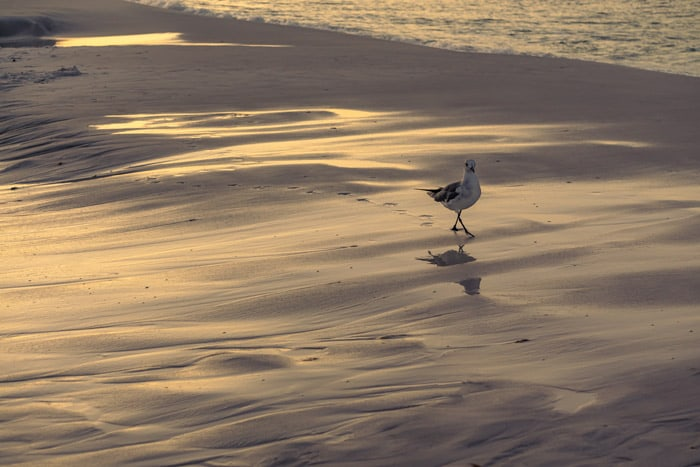 Sunrise bird watching in Destin