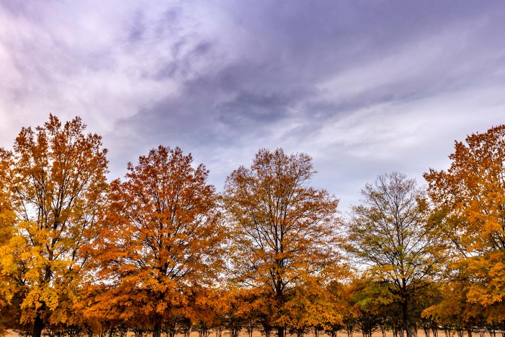 A beautiful fall morning in Georgia