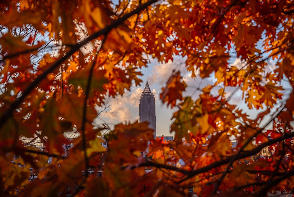 Looking through a canopy of fall leaves at Atlanta's Bank of America building