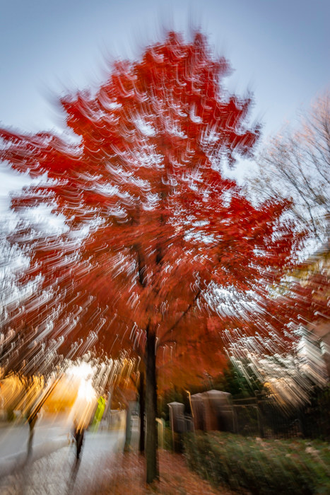 Dragging the shutter for a photo of fall foliage in Atlanta