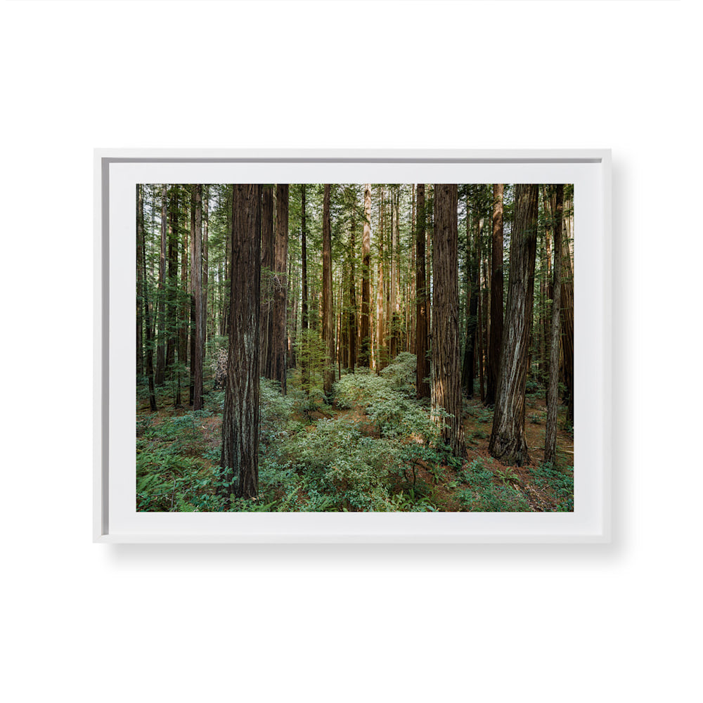 """Fine art print of """"The Grove"""" by Timothy Hogan in a White Frame."""