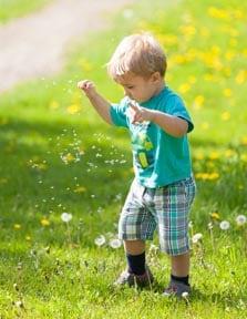 magic of dandelions