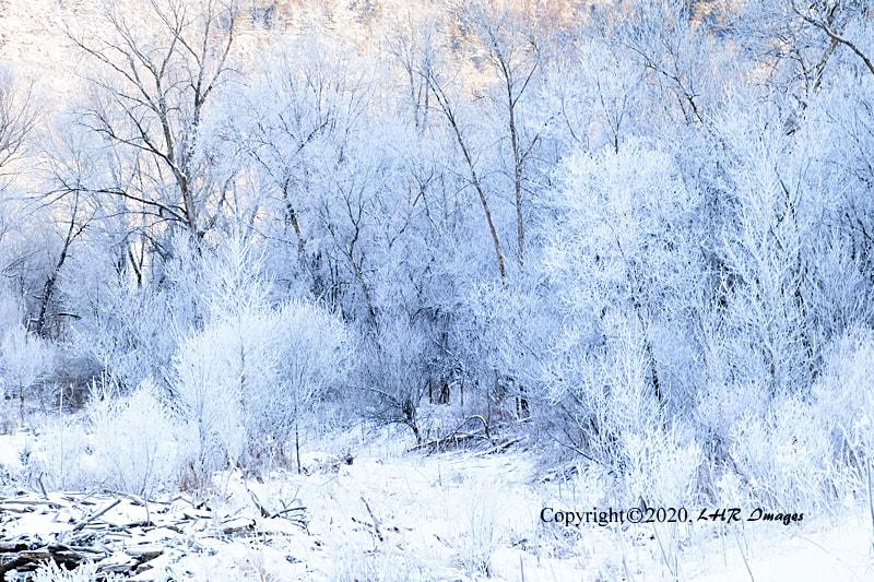 Hoar Frost -- January 1, 2020