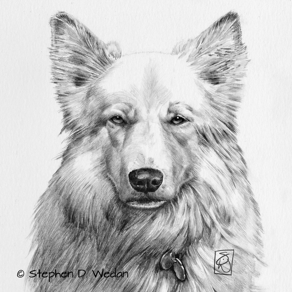 drawing of a wolf-like dog