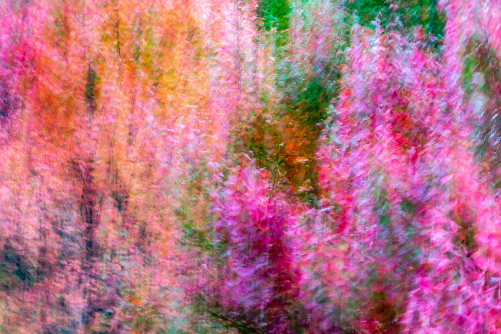 Colorful abstract photo of trees in Atlanta