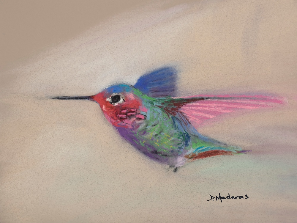 Hummingbird in Flight