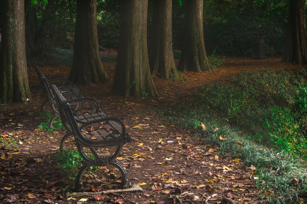 Serenity in Piedmont Park
