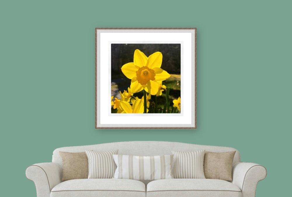 Daffodil Instagram Wall Art by George Delany