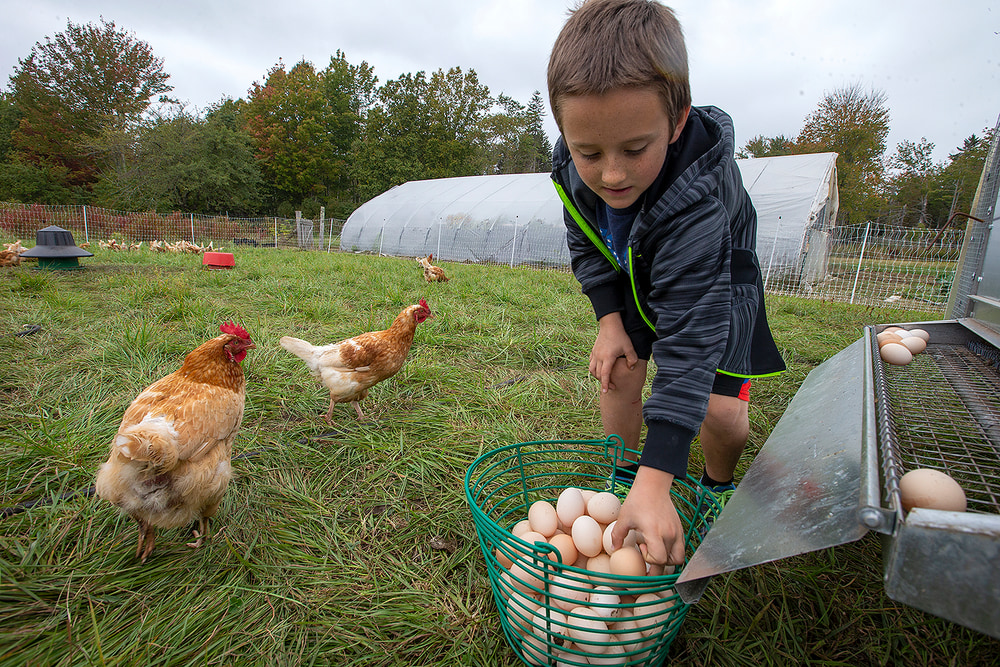 Pasture Raised Organic Eggs