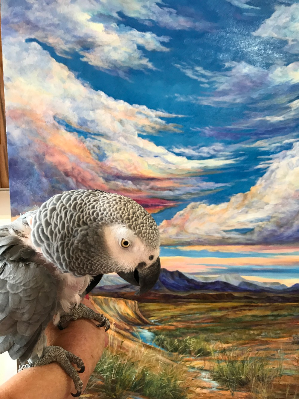 grey parrot admires a landscape painting on the easel