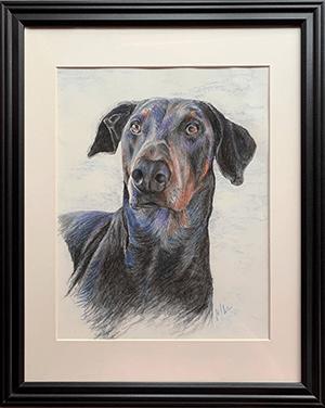 Pastel pencil portrait of framed doberman pinscher