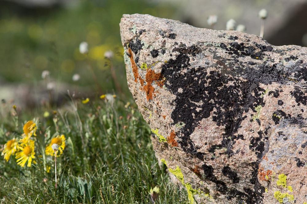 Boulder with multiple lichen species