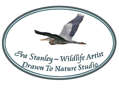 Eva Stanley, Drawn To Nature Studio logo.