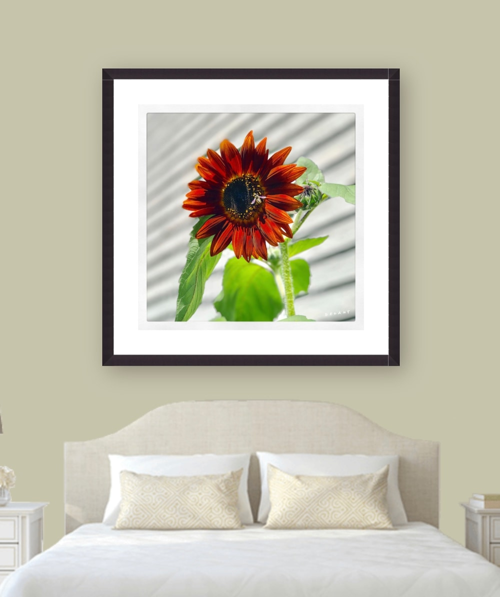 September Sunflower Wall Poster