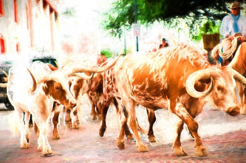 The Herd at the Historic Fort Worth Stockyards, Stockyards Heritage
