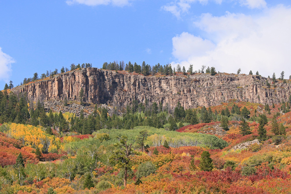 Fall Colors, north rim Black Canyon of the Gunnison