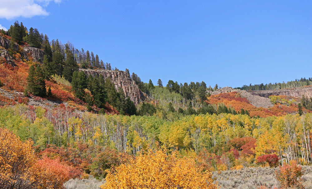 North rim of Black Canyon of the Gunnison, beautiful mosaic of fall colors