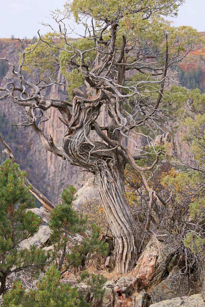 Another of Nature's bonsai trees.