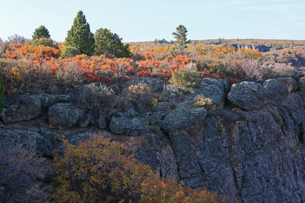 Fall colors atop cliff.