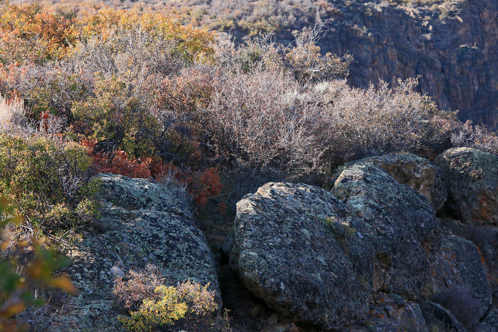 Fall colors and lichen covered rocks.