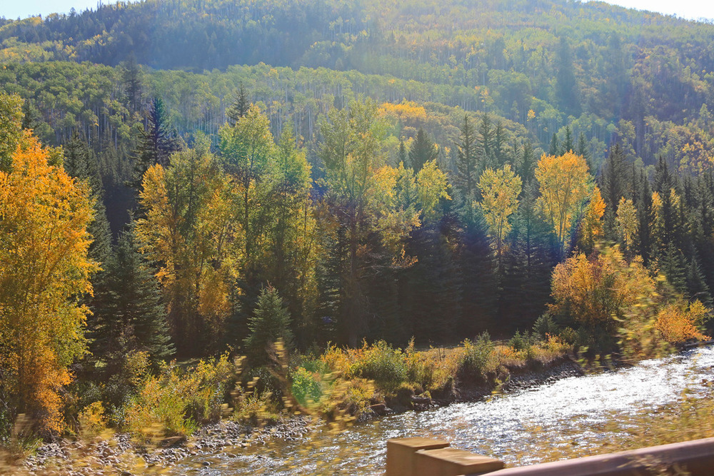 North fork of the Gunnison River and forest