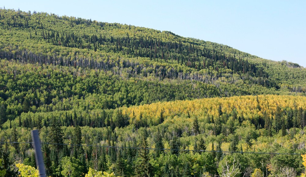Climbing toward McClure Pass