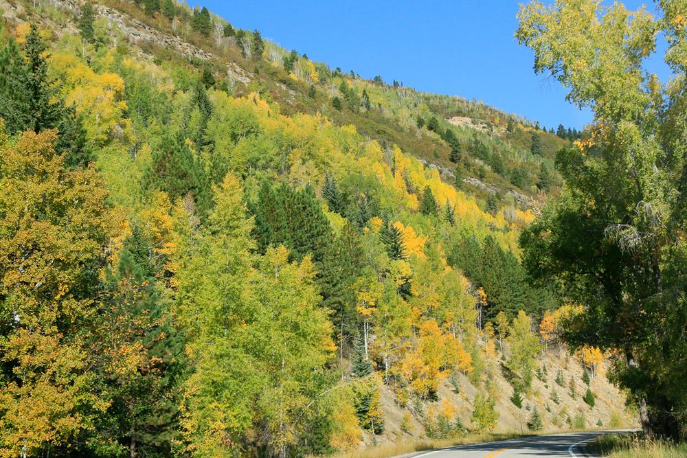 Aspen covered slope