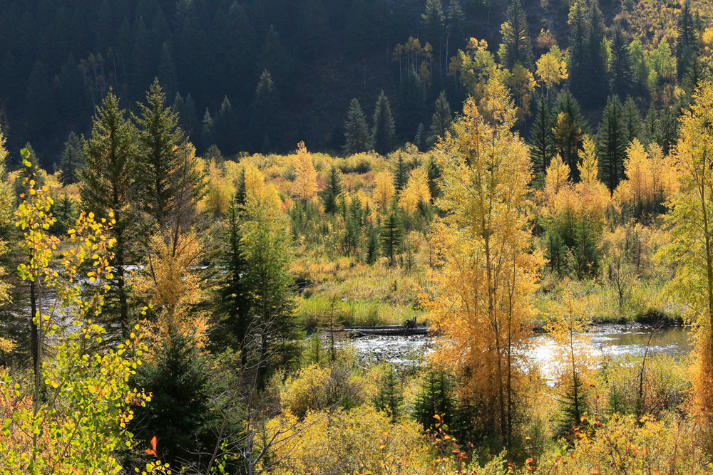 Pines, aspens, and Crystal River
