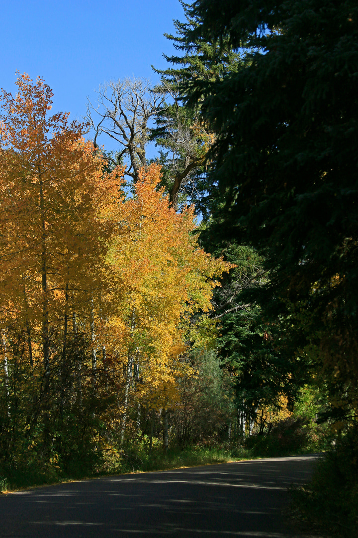 Fall colors north of Redstone.