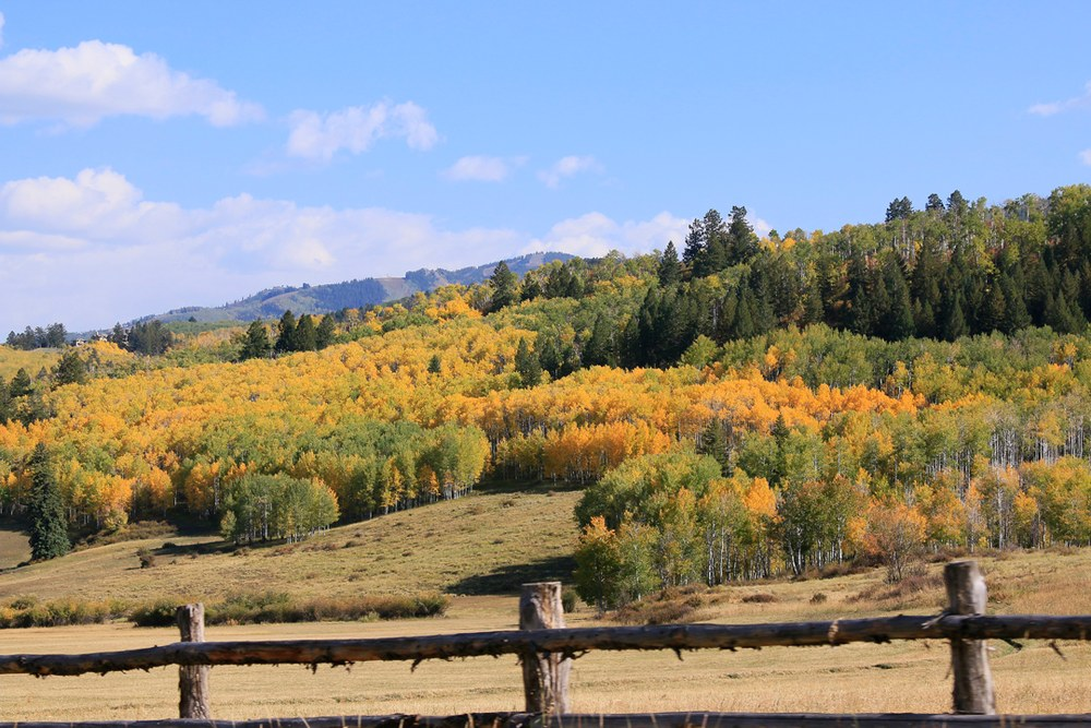 Fall meadow with aspens.