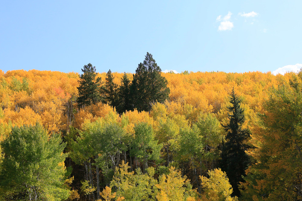 More, more, and more fall color!
