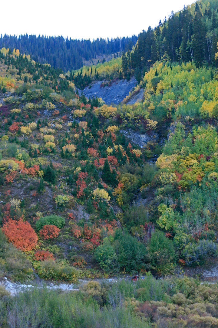 Aspens and other fall colors on the mountain side.