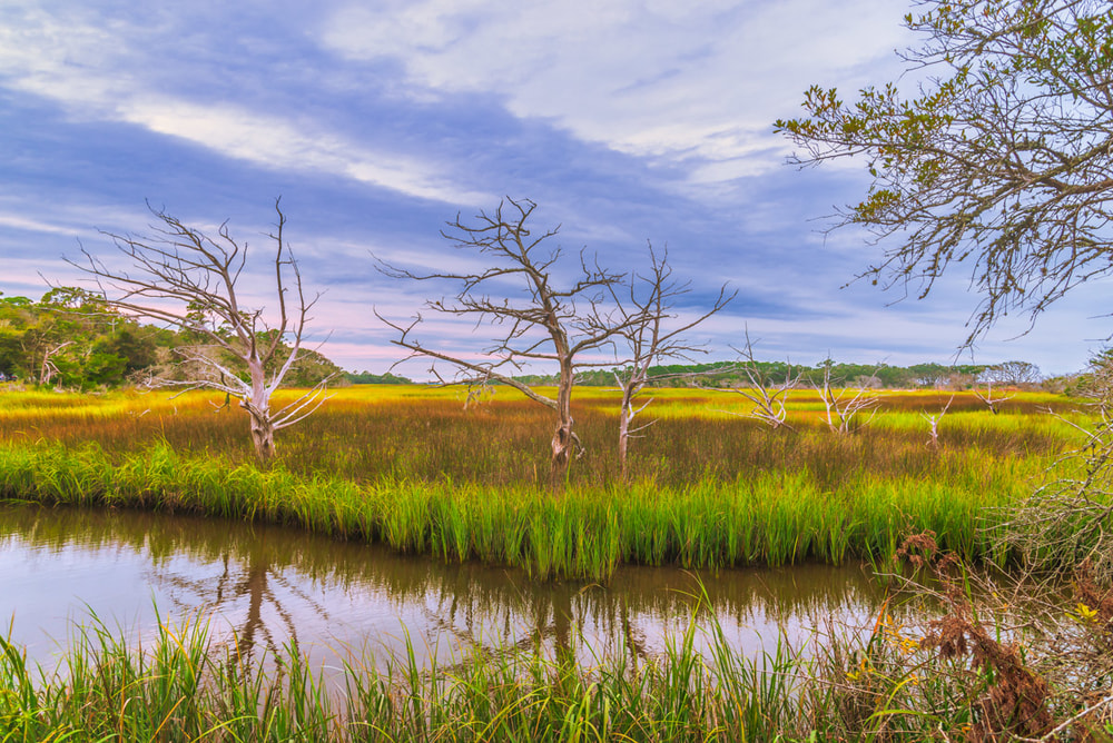 Sea grass and driftwood trees on Jekyll Island