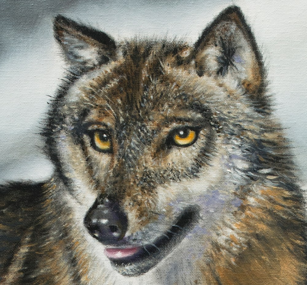 This is a close up of Love Timber Wolf (head detail).