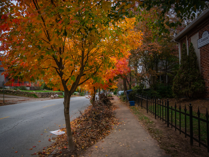 A photo of the street with colorful fall foliage on the trees