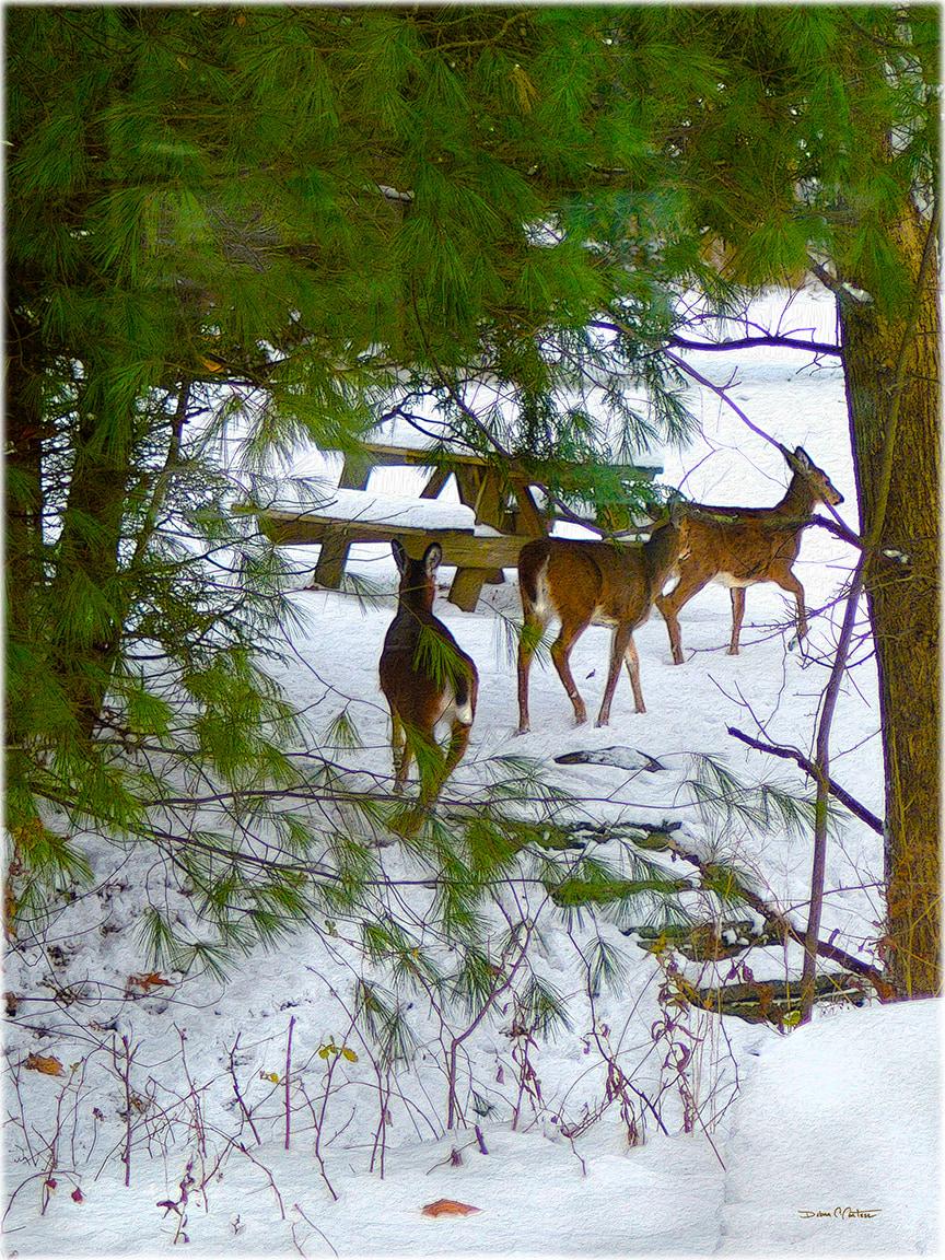 3 Deer Prancing Through The Snow