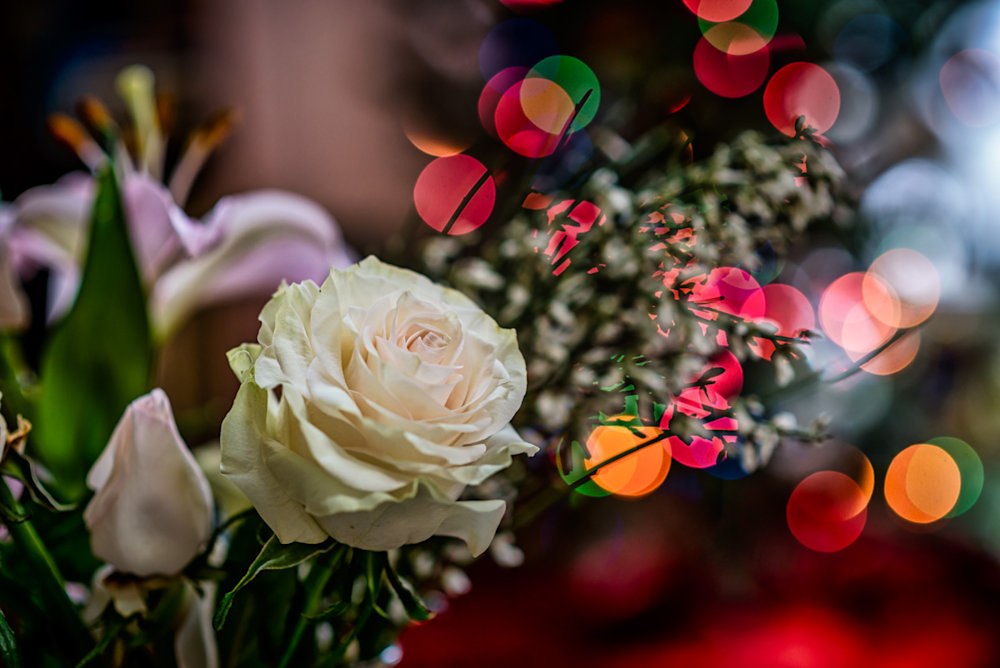 A beautiful rose in front of a Christmas tree