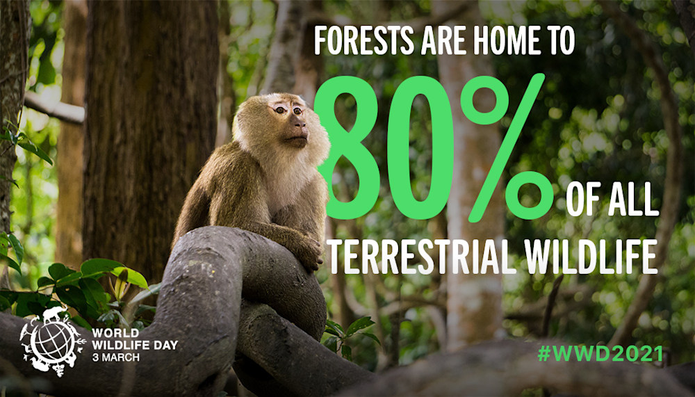 "On March 3, 2021, we celebrate World Wildlife Day under the theme ""Forests and Livelihoods: Sustaining People and the Planet."""
