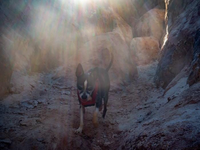 My dog, Jack Bauer, running through Providence Canyon