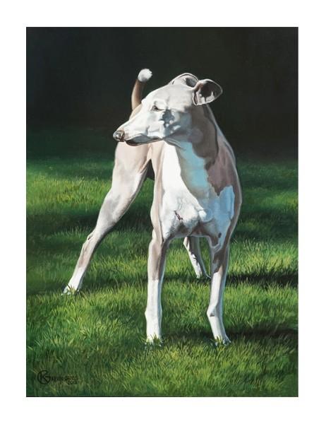 Bart is a portrait of an Italian greyhound