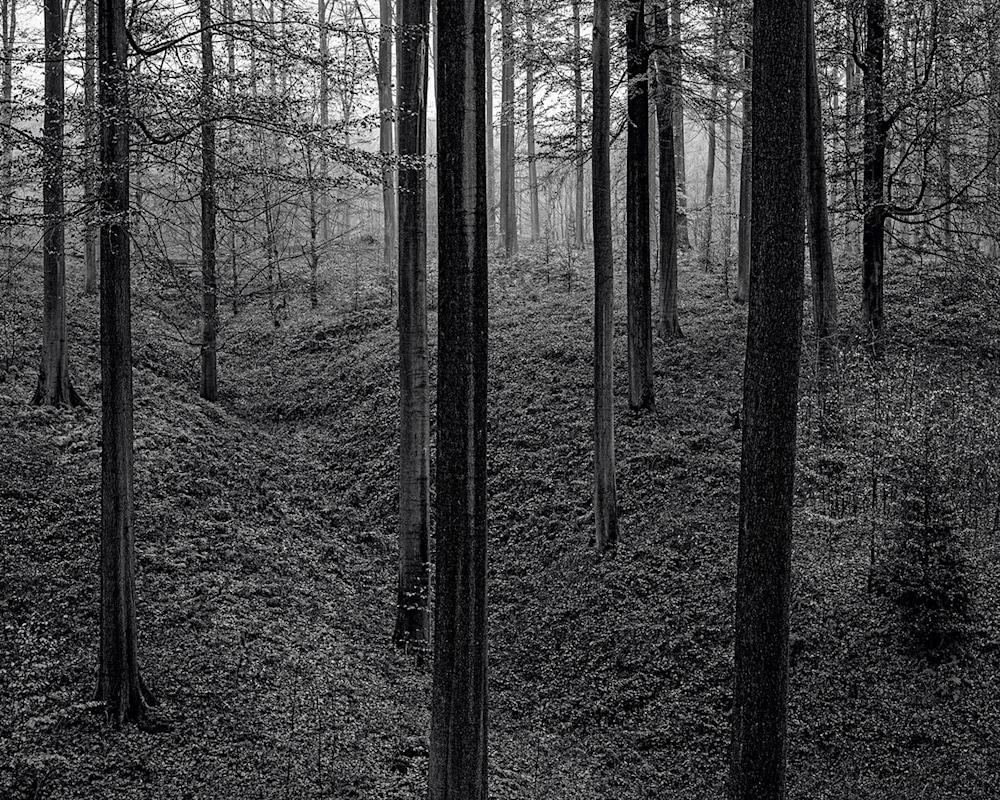 Late Autumn Walk Through the Sonian Forest No. 21, Belgium