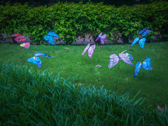Little plastic butterflies on sticks floating all over someone's front yard