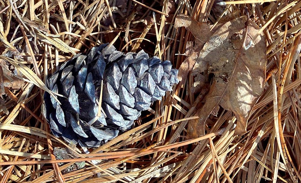 Fallen Cone
