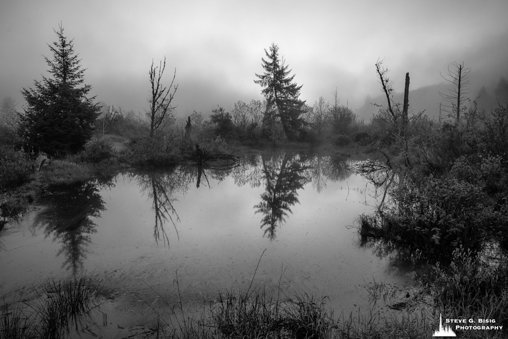 Grays River Estuary, Washington