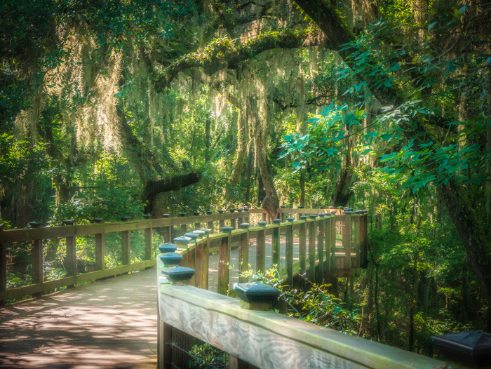A tree-covered raised wood path at a park in Tallahassee.