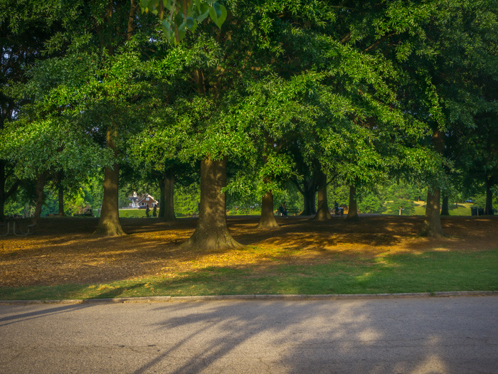 Beautiful green trees in Piedmont Park