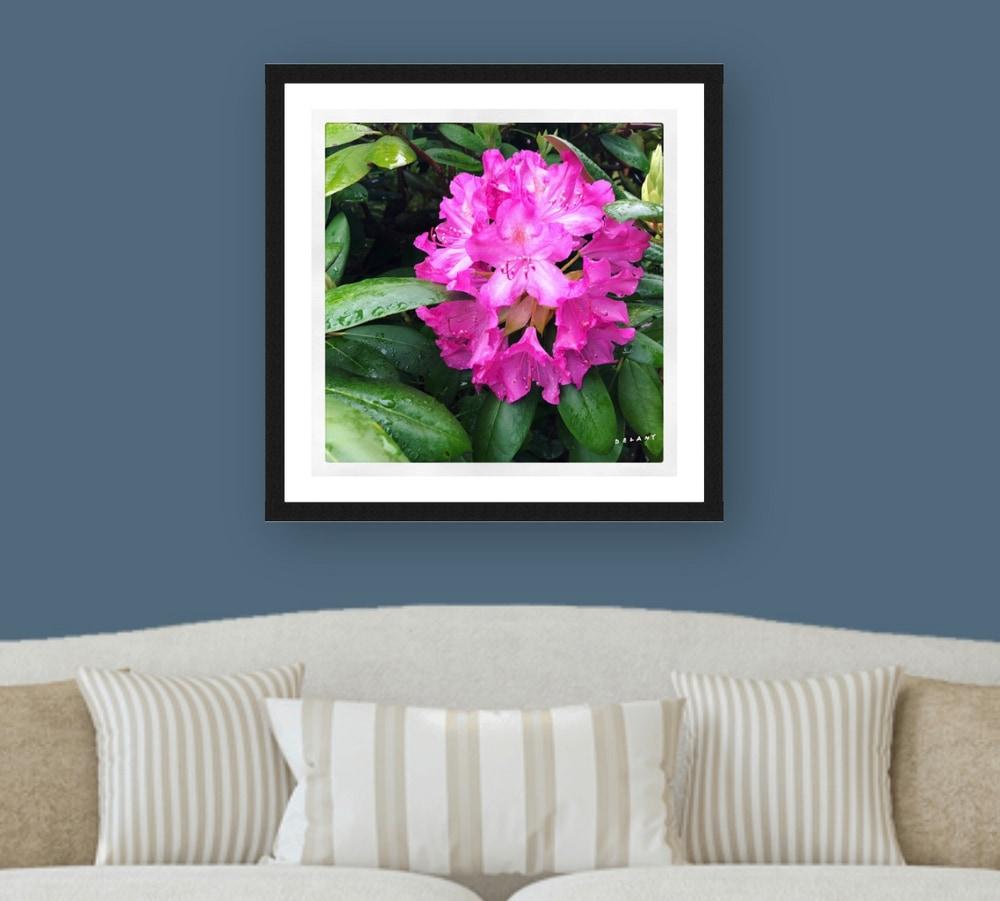 rhododendron jubilee